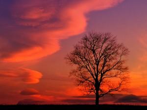 tramonto-rosso-kentucky