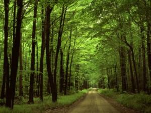 foresta-allegheny-pennsylvania