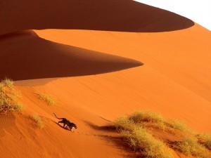 dune-sabbia-sossusvlei-park-namibia