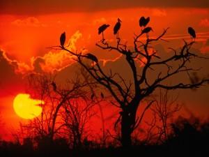 tramonto-in-botswana