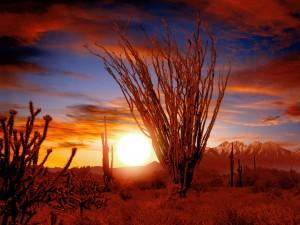 ocotillo-sonora-deserto-arizona