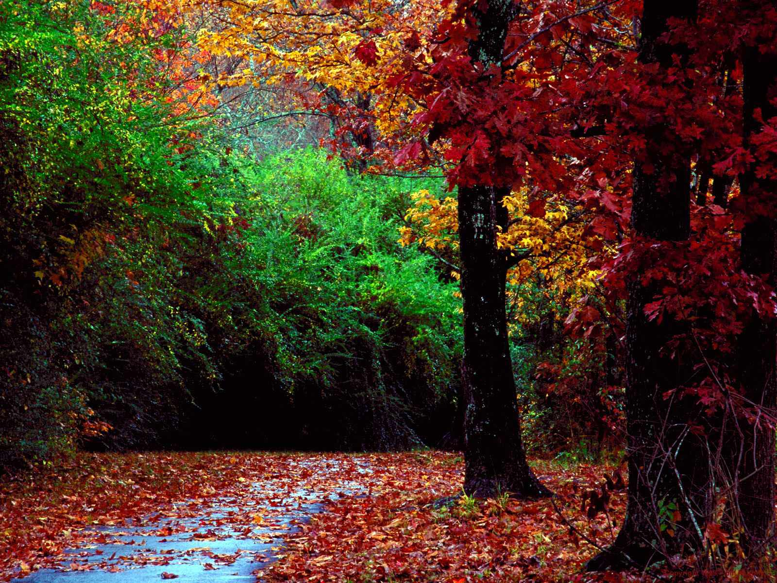 desktop wallpaper autunno