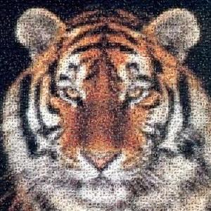 fotomosaico-tigre