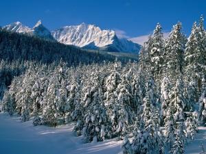nevicata d'inverno
