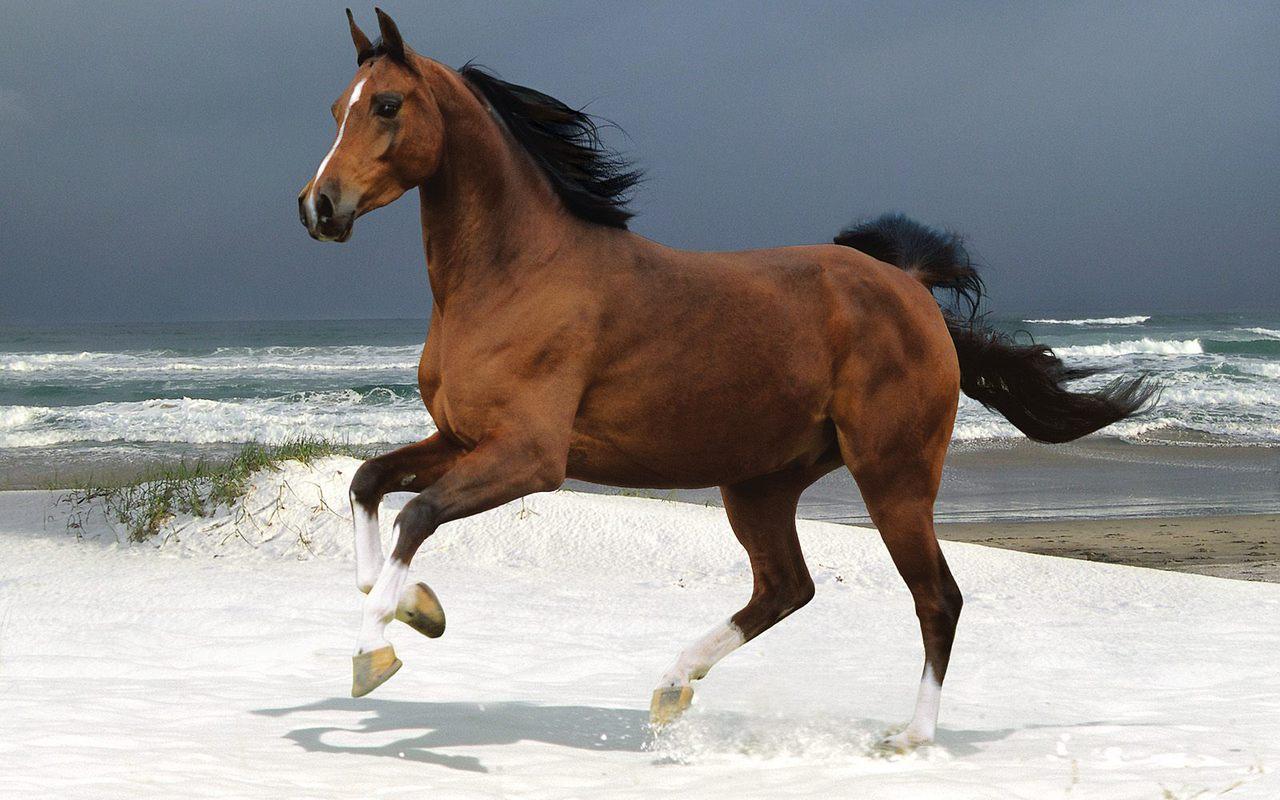 Desktop Wallpaper Cavallo In Riva Al Mare