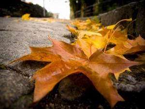 foglie autunno 2012