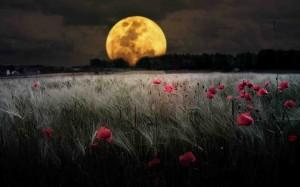 La luna tramonta sul campo