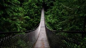 Ponte sospeso sulla giungla