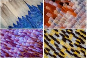 Le macro fotografie delle farfalle di Linden Gledhill