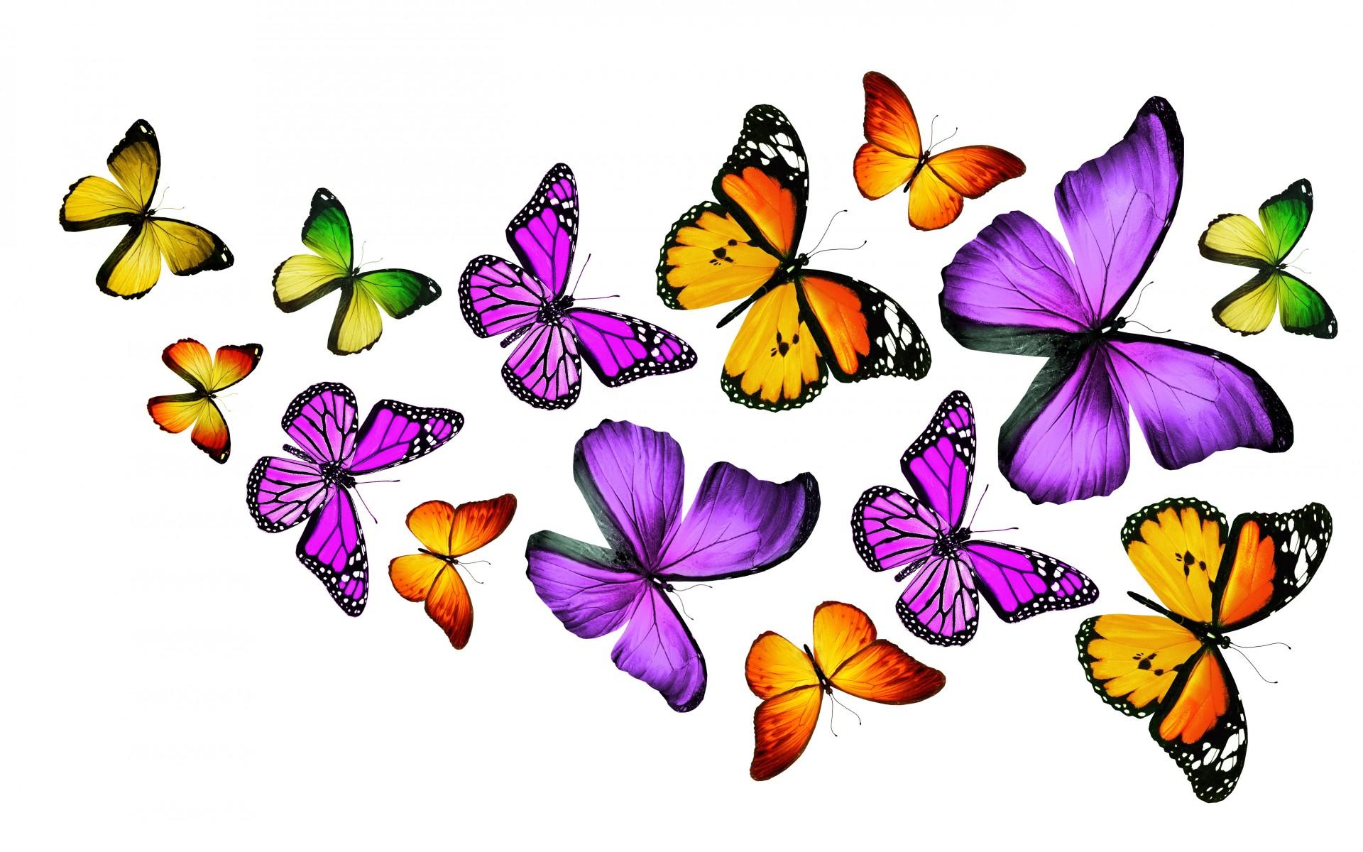 Desktop Wallpaper 195 – Collezione di farfalle