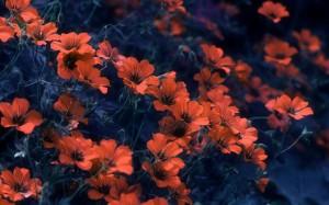 Fiori rossi su blu