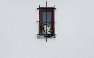 Gatto sulla finestra