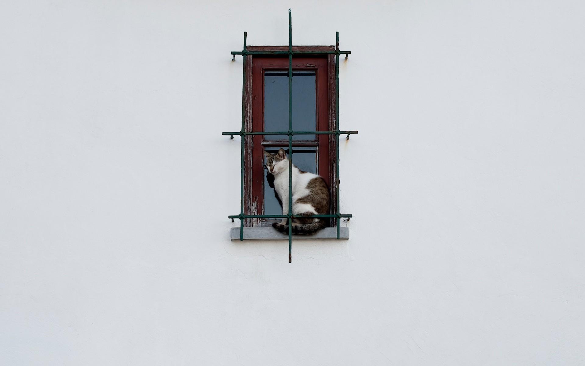 Desktop Wallpaper 191 – Gatto sulla finestra