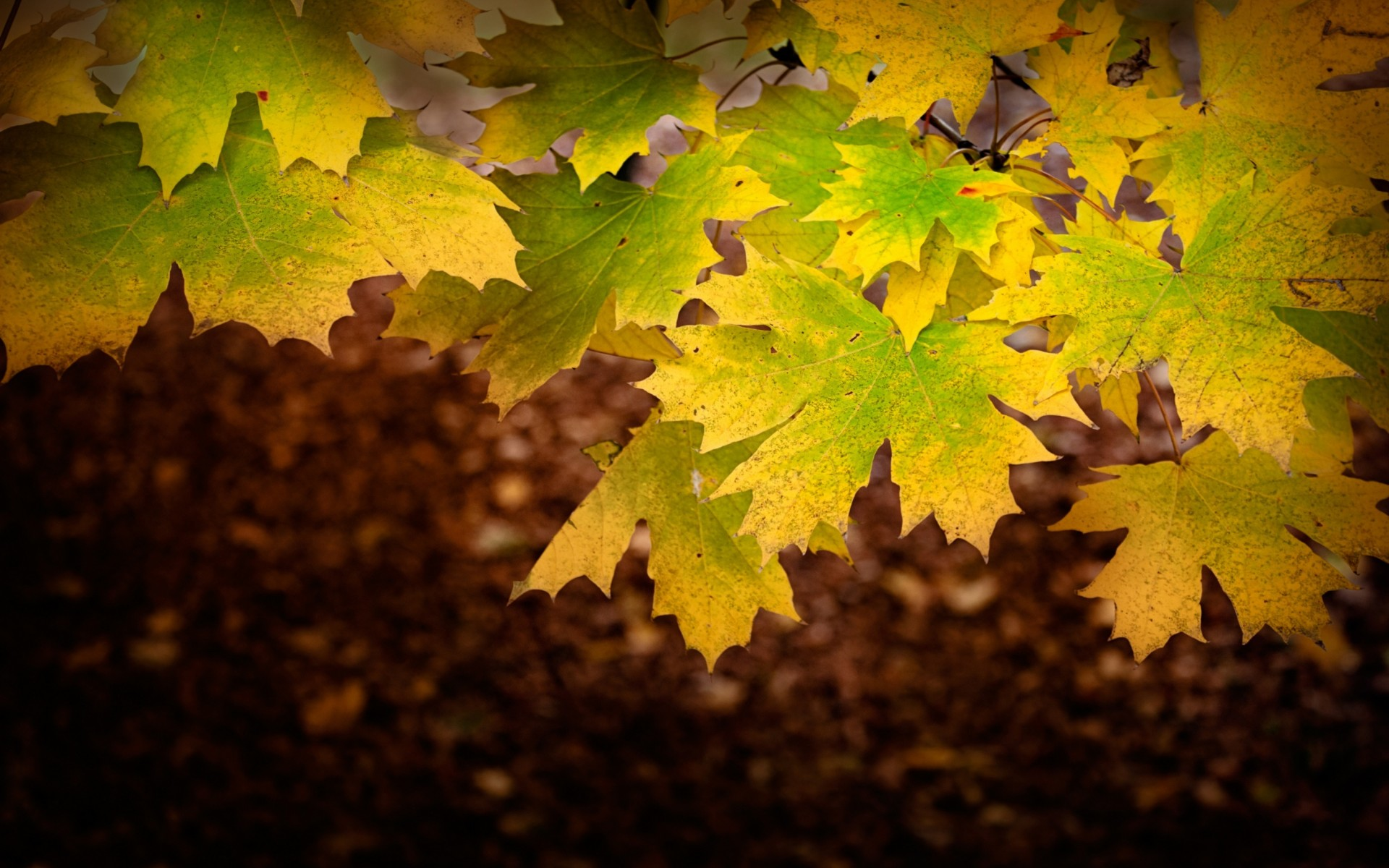 Desktop Wallpaper 201 – Autunno 2014