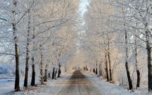 Strada con alberi ghiacciati