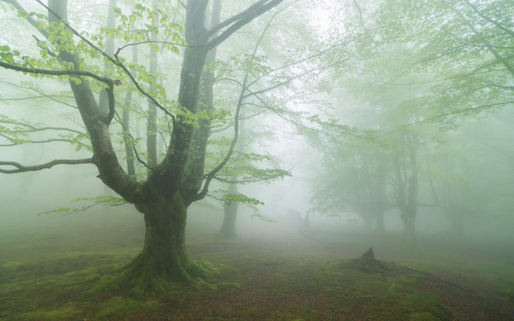 Desktop Wallpaper 225 – Nebbia