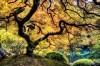 Desktop Wallpaper 232 – Albero della vita