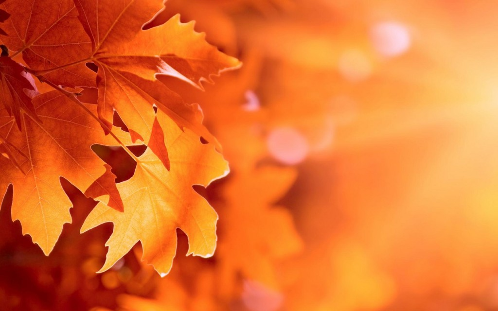 Desktop wallpaper foglie d 39 autunno for Sfondi autunno hd