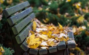 panchina autunno